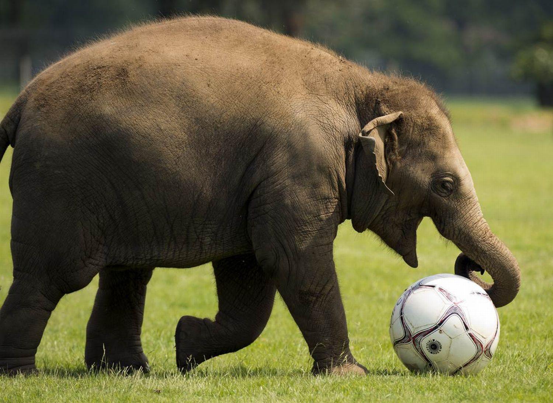... funny animals, euro 2012, animals play football, animals play soccer