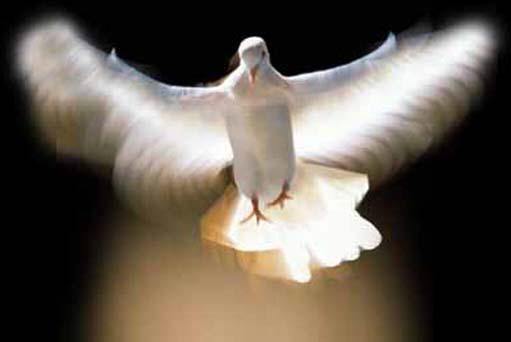 Holy Spirit: The Holy Spirit's Role in God's Kingdom