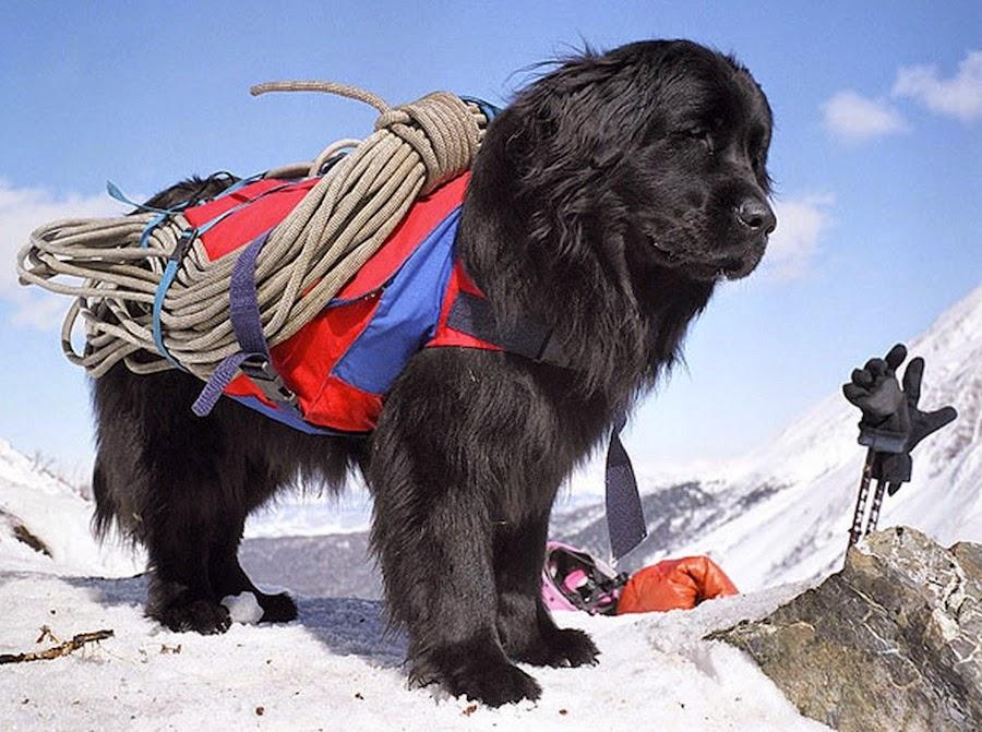 Bear in a Hat: A blog from Stetson's Program in Russian ...