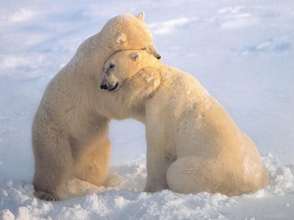 ... animals hugging, animals hugging, cute animal hug, adorable animal