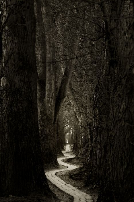 Path into the dark woods