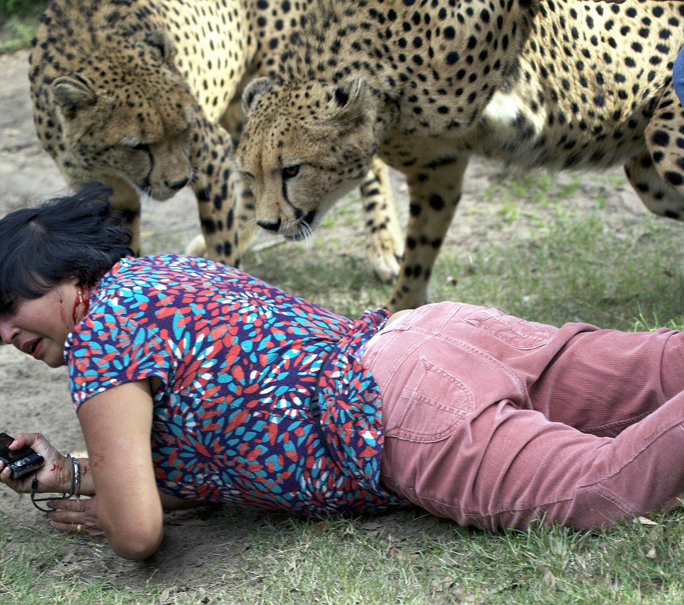 The moment British woman was mauled by 'tame' cheetahs at ...
