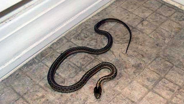 TEN TEN TEN: The secret snake house