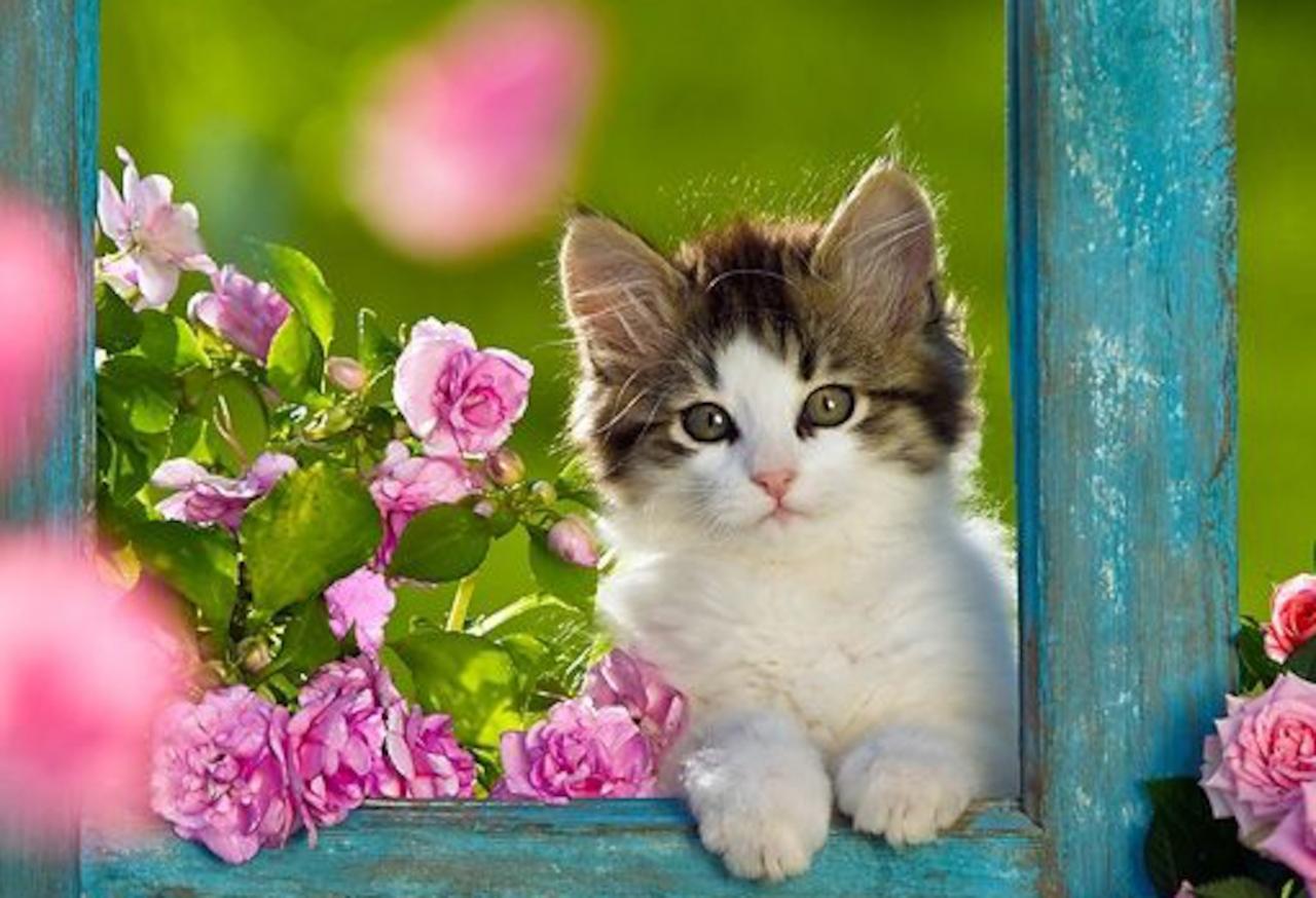 Best Cute Kitten Wallpaper No 9 of 10 - HD Wallpapers ...