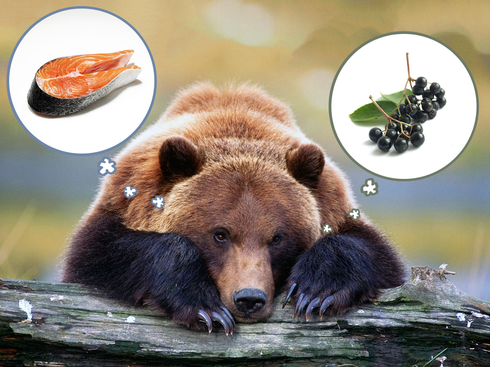 Bears Are Turning Vegetarian Due to Climate Change | Food ...