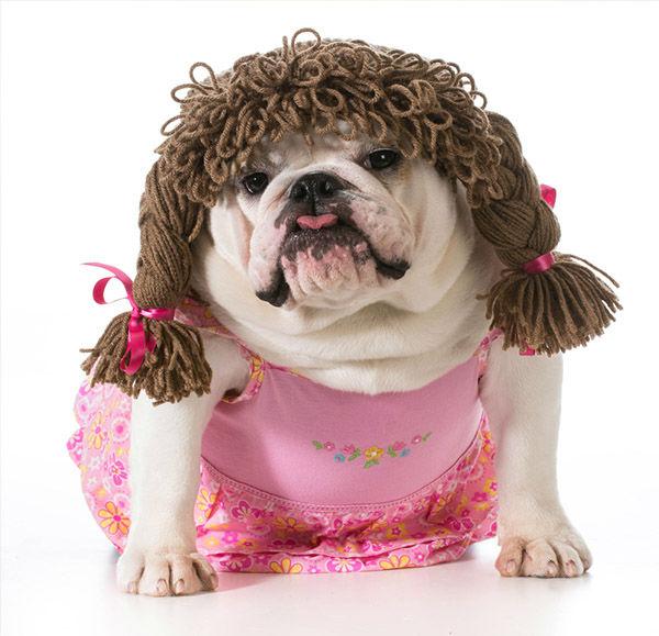 Most popular dog names of 2014 | 6abc.com