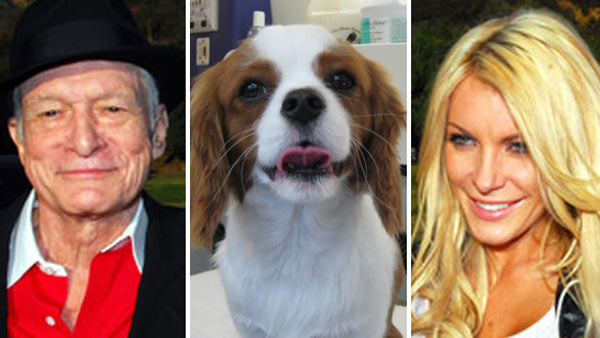 Celebrity Pets - see stars' furry friends | OnTheRedCarpet ...
