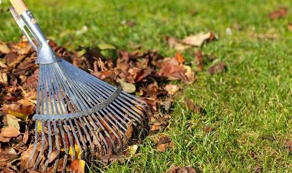 ... your garden tidy in autumn   Garden   Life & Style   Daily Express