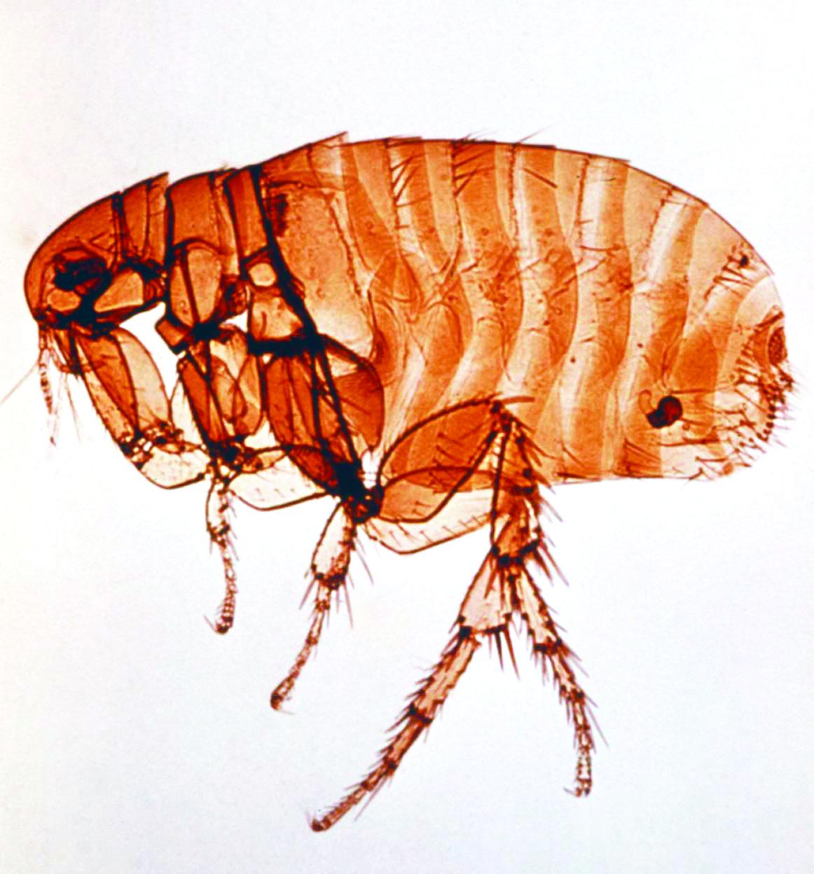 Class Action Lawsuit: Fleas