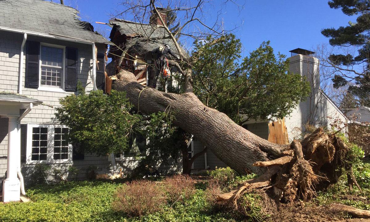 Tree Crashes Through Towson Home | WBAL Radio 1090 AM