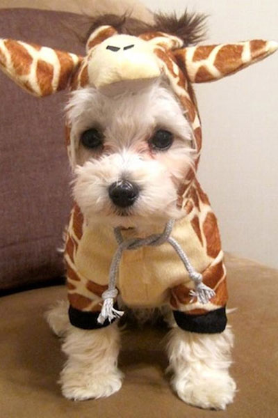 25 Pets that are all dressed up with nowhere to go