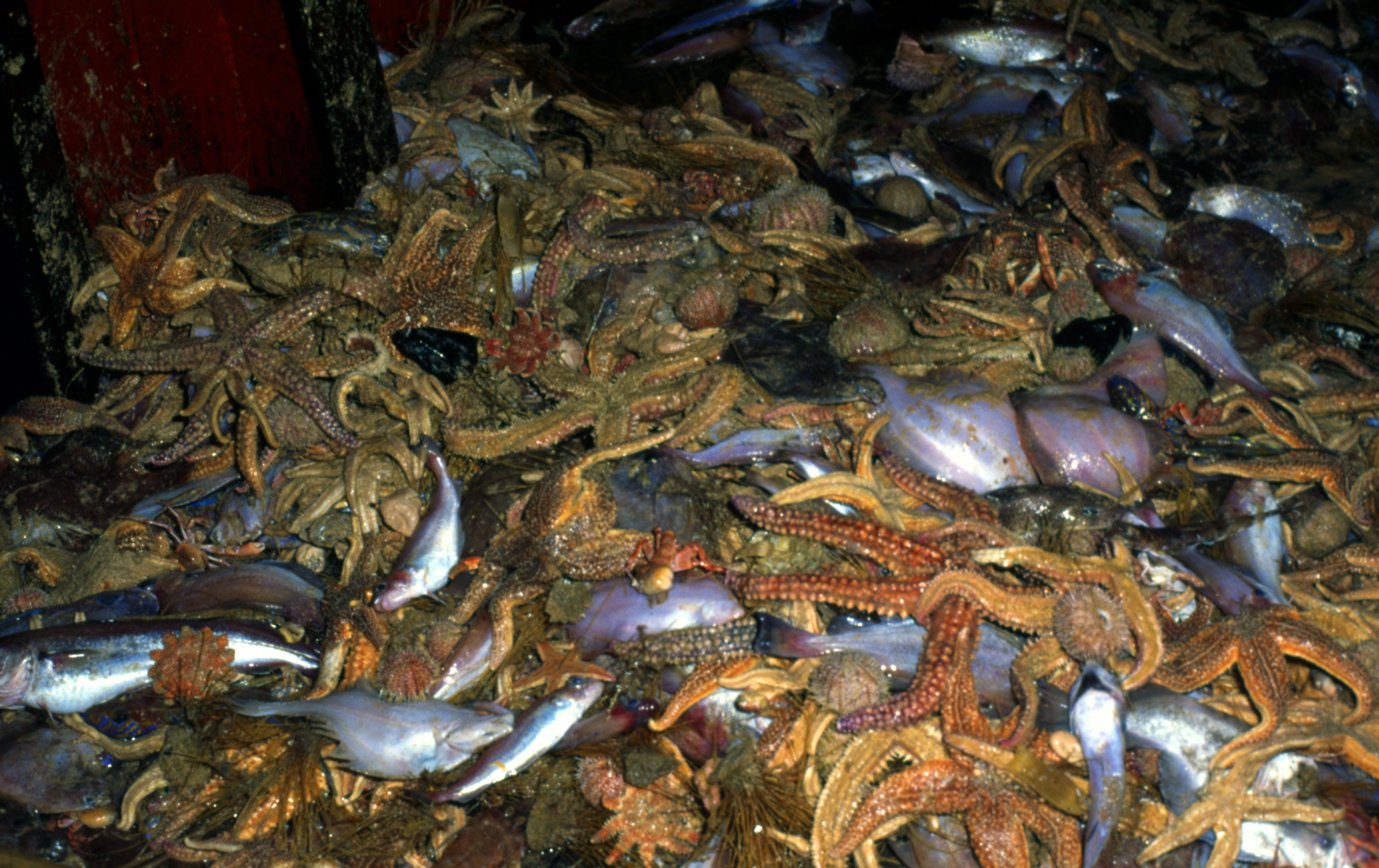 New guide to reducing bycatch goes online | WWF