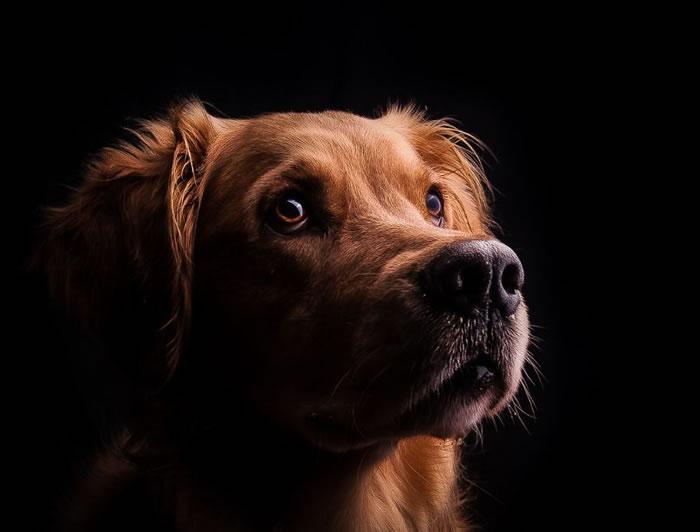 Dog Stock Photos 15 Amazing Images
