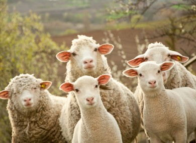 ... Pre-Budget Submission says vital farm schemes must be protected