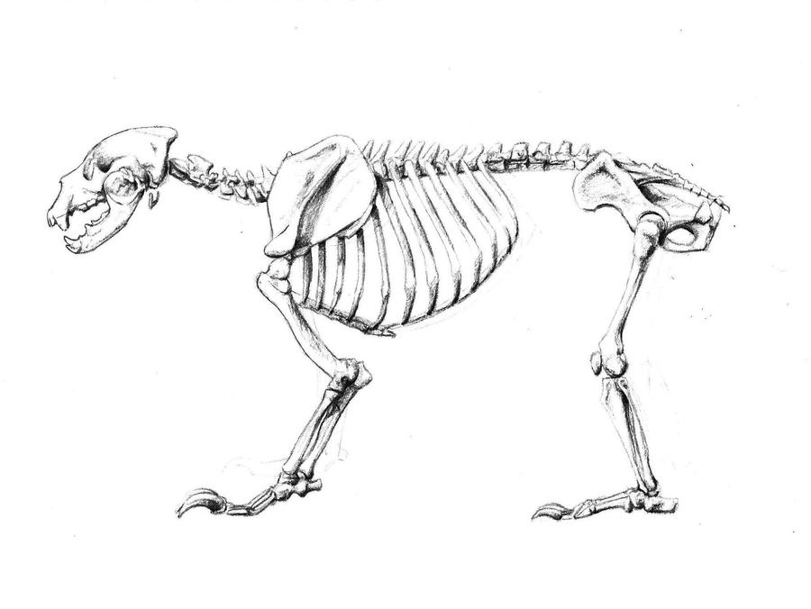 Bear Skeleton by ArsonAnthemKJ on DeviantArt