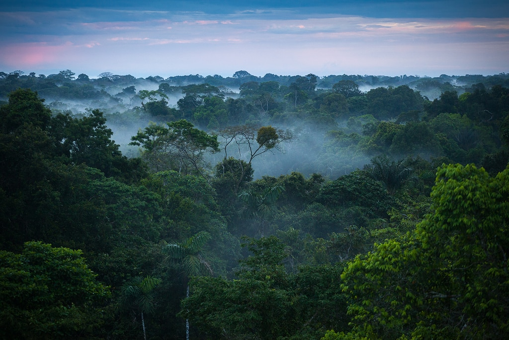 Amazon Rainforest, Feel the Rainfall of Leaves - Found The ...