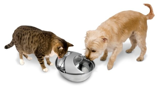 Dog Water Fountains Reviewed