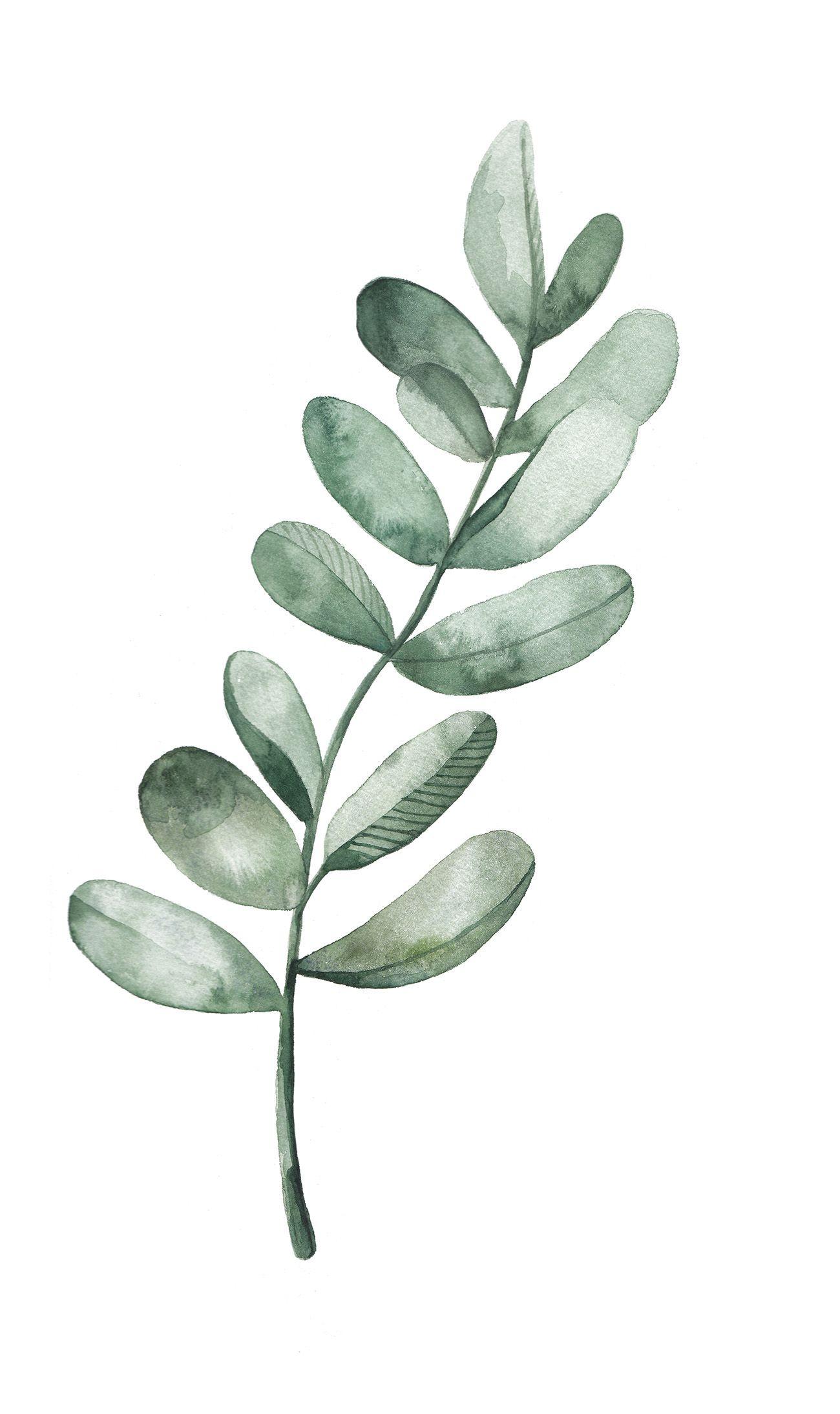 Watercolor Leaves at GetDrawings   Free download