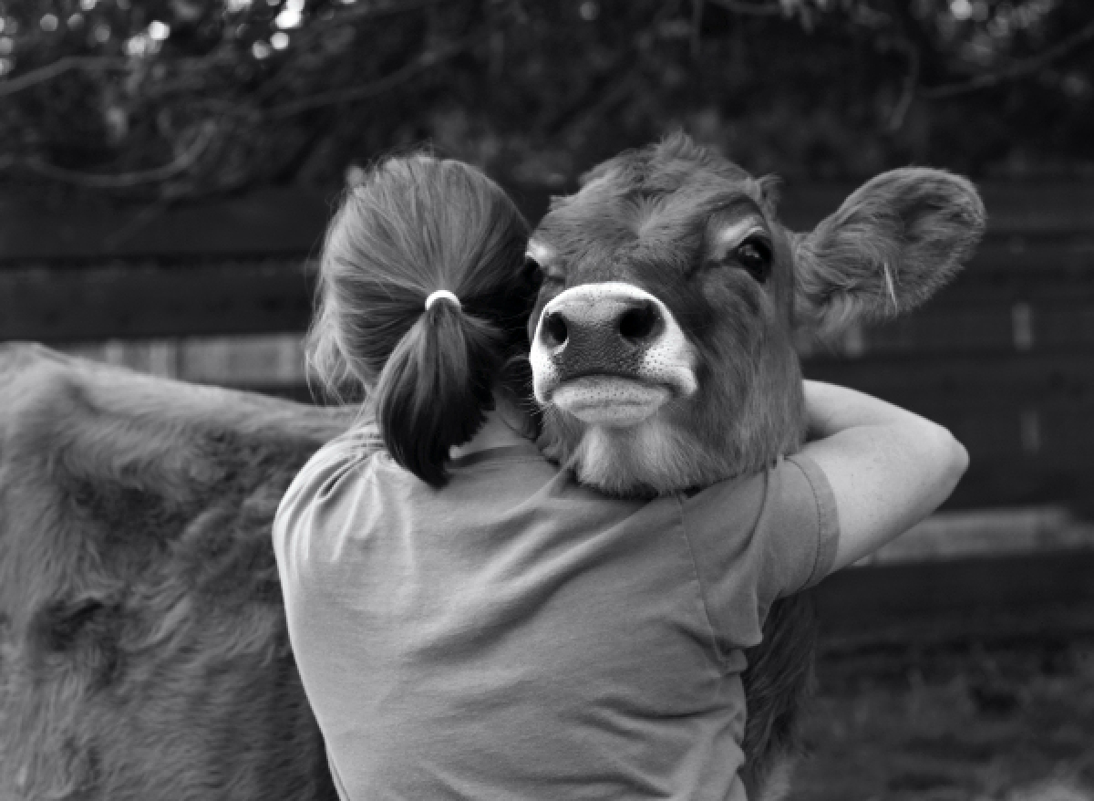 Aww! These 10 HUGS from Animal Friends Will Make You Feel ...