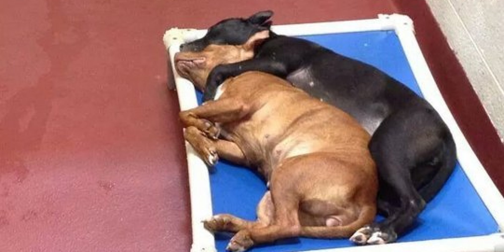 Moving Image Shows 2 Shelter Dogs Who Turned To Each Other ...