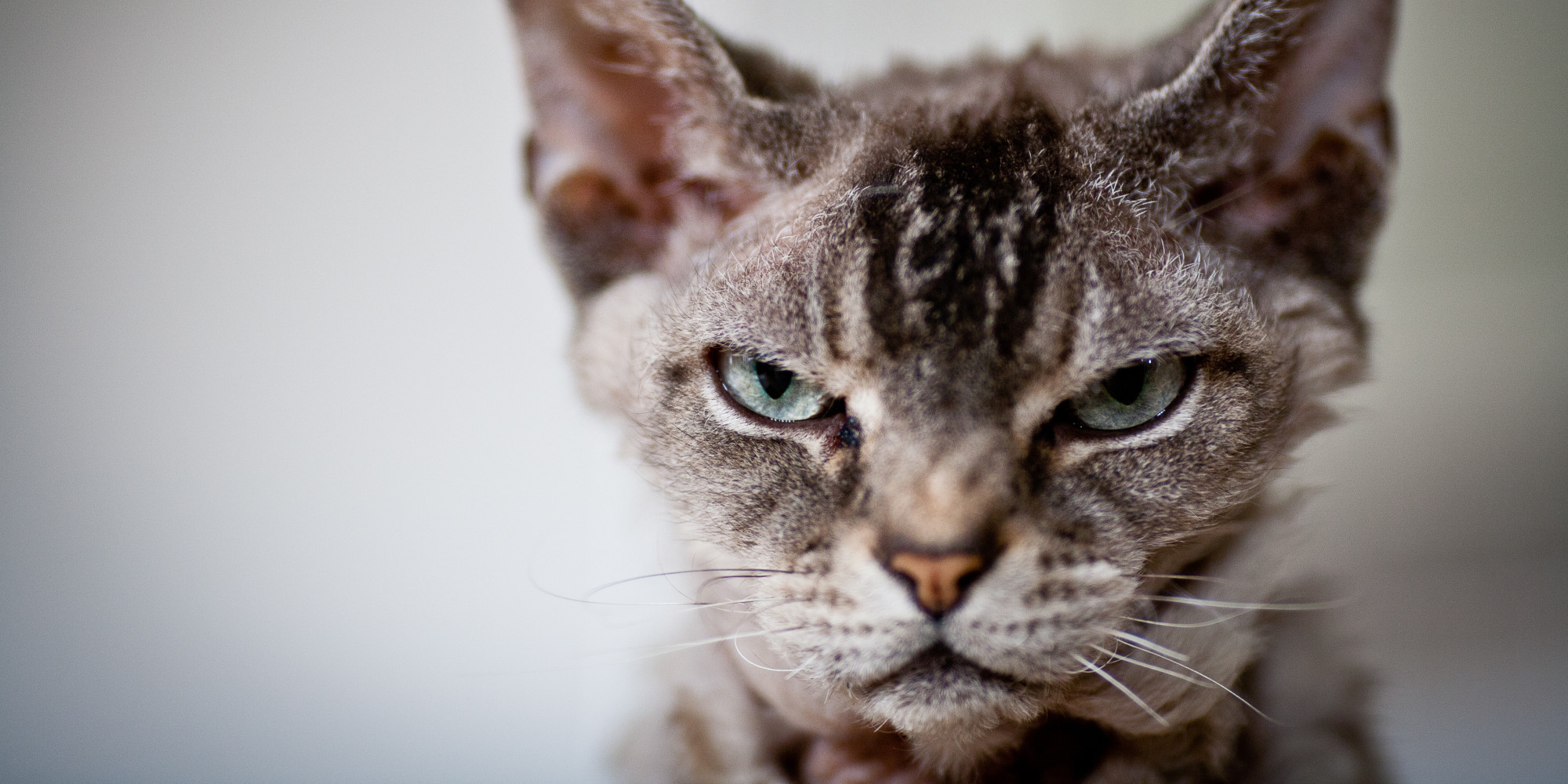 Flight on the way to Qatar is Grounded After Angry Cat Attacks Pilot