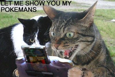 My Pokemans, Let Me Show You Them | Know Your Meme
