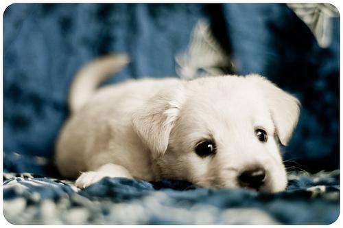 Sweet puppies - Dogs Photo (21180246) - Fanpop