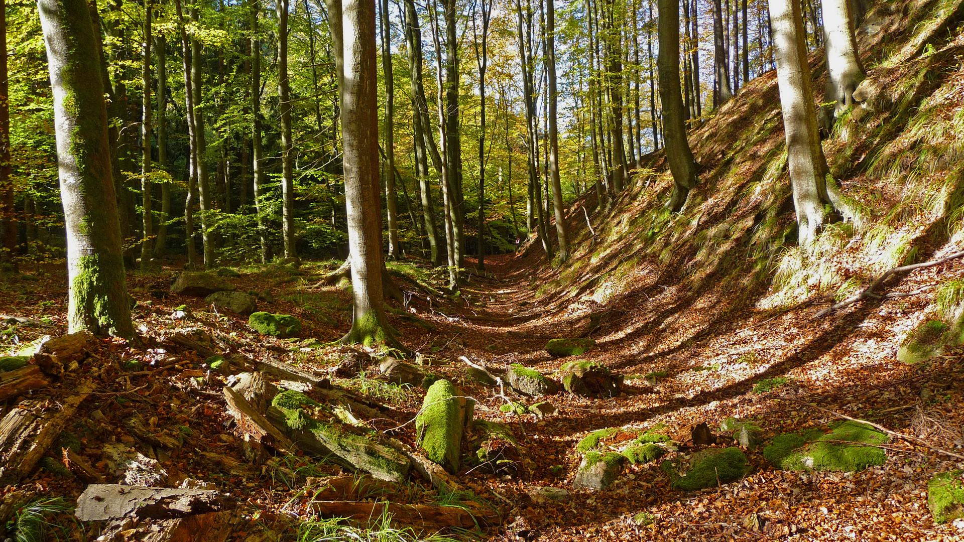 Waldwege Foto & Bild | jahreszeiten, herbst, brocken ...