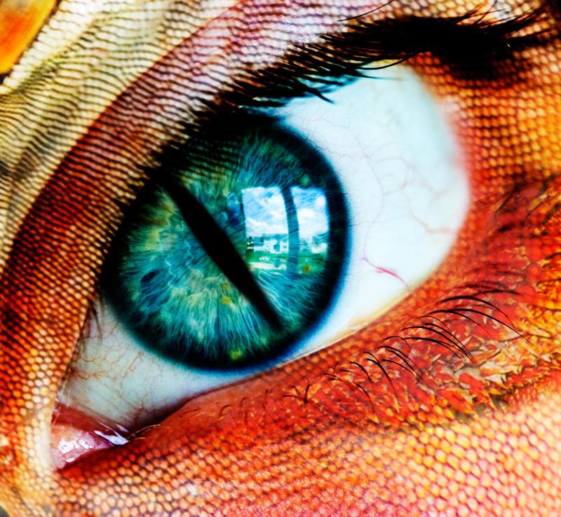 reptilian eye by darkstar797 on DeviantArt