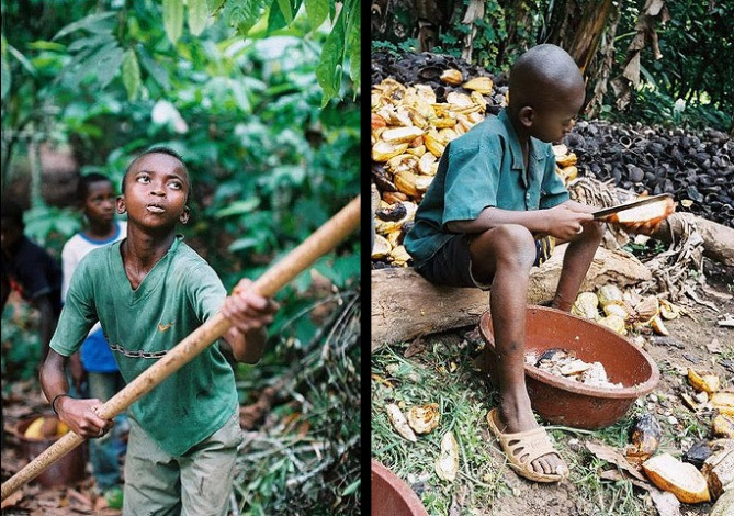 El cacao. Clases y cuál utilizar | Veganizando
