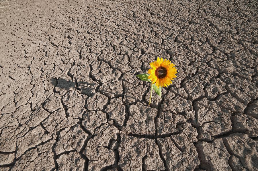 Flower in the Desert - Lambchow