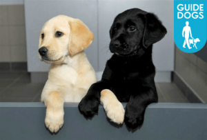Guide Dogs charity appoints Zone for content strategy ...