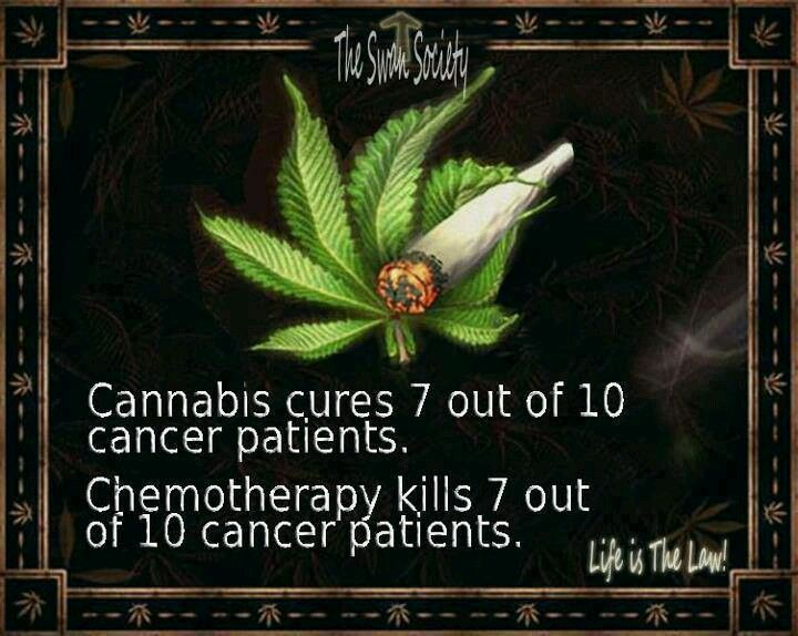 day keeps the Chemo away | Cannabis Enthusiast | Pinterest