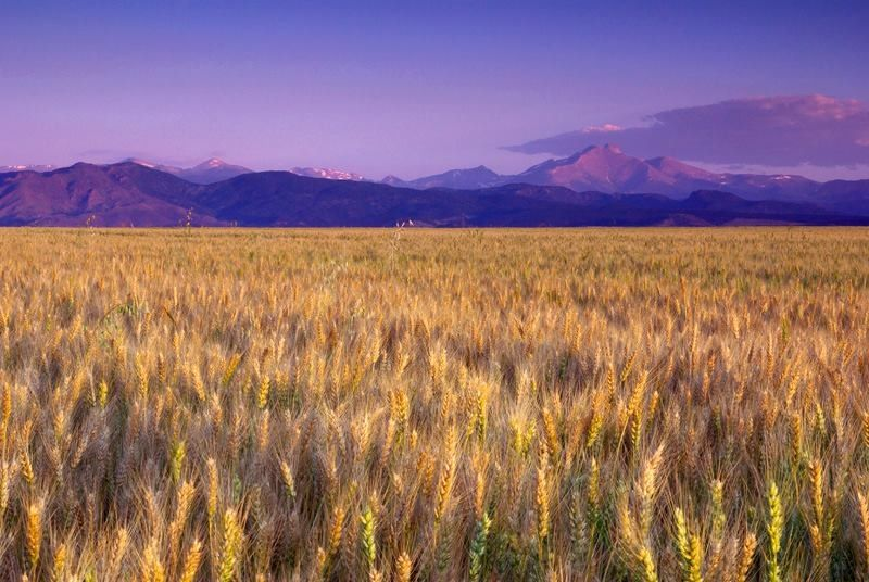 Amber waves of grain | Beautiful places | Pinterest