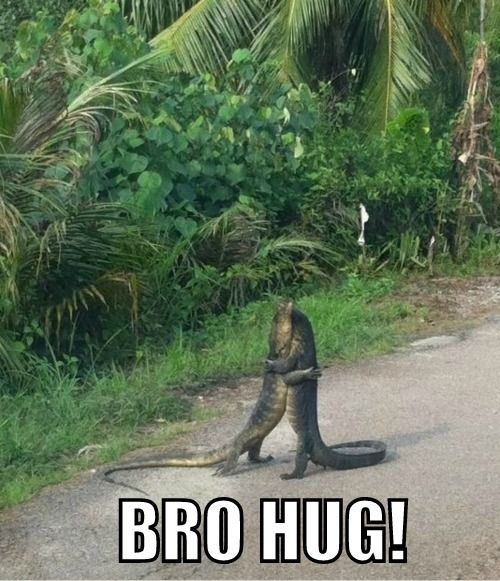 Bro Hug | Funny Animal Pictures | Pinterest