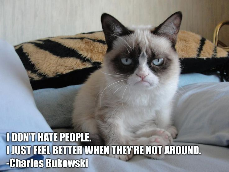 "Grumpy Cat on the Charles Bukowski quote -""No"" 