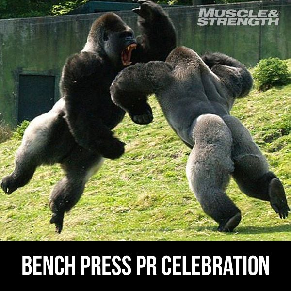 What's your latest bench press PR?