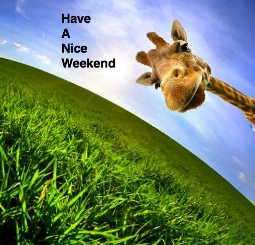 Have a nice weekend! | Dogs, cats & other creatures | Pinterest