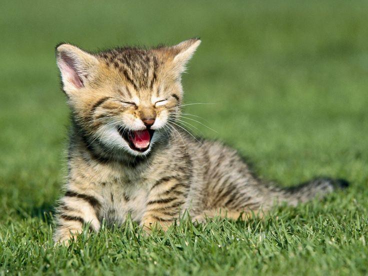 KITTEHS!!!!! | Baby Animals | Pinterest