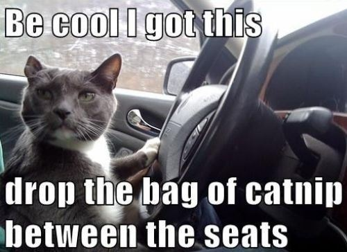 Cat Saturday (32 Photos) : theCHIVE