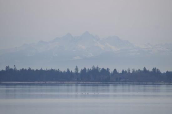Drayton Harbor - Picture of Blaine, Washington - TripAdvisor