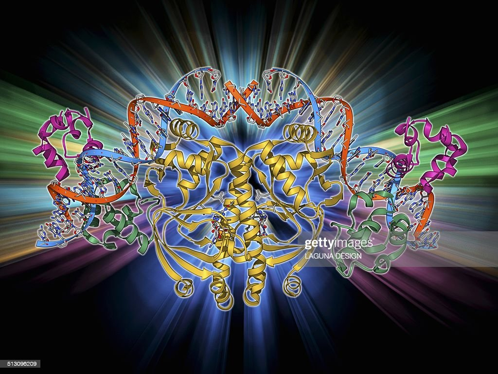 Gene Activator Protein Stock Illustration | Getty Images