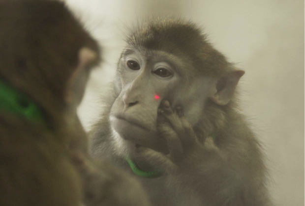 Meet The Most Narcissistic Monkey On The Planet - Vocativ