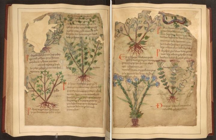 Medieval Herbal Remedies Manuscript Now Available Online
