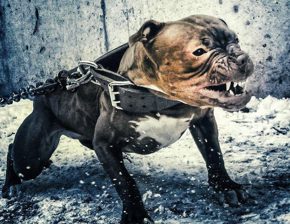 "Why I Use ""Agitation"" Collars | Next Level Dogs"
