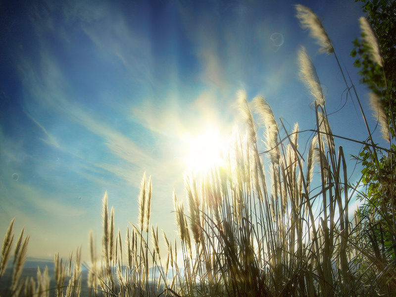 Finding Joy in Simple Things (Joy in January Project) | One Seed - the ...