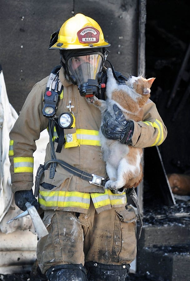 Firefighters Rescue Cat From House Fire