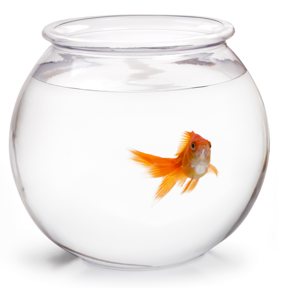 Leadership The Fishbowl | The Student Affairs Collective