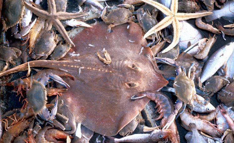 Overfishing - Biomes