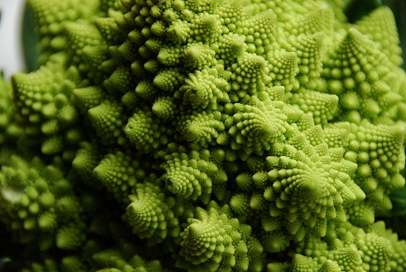 8 Stunning Fractals Found in Nature | The Science Explorer